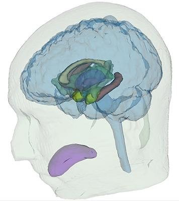 glass_brain_sm